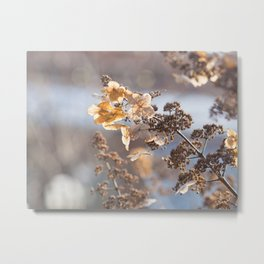 Sunlight through Dried Flowers Metal Print