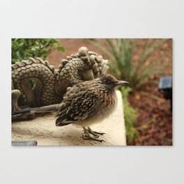 Closeup of Cold Fluffed Up Road Runner by Dragon Canvas Print
