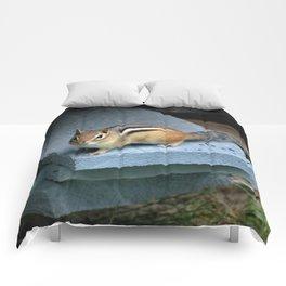 Chip on the Block: Adirondack Chipmunk Comforters