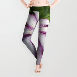 Clematis - Stunning two-tone flowers Leggings