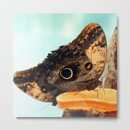 Butterfly on slice of orange Metal Print