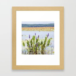 Florida Beauty 5 Framed Art Print