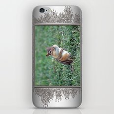 Chipmunk iPhone & iPod Skin