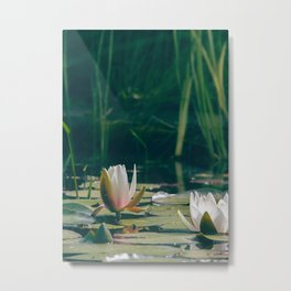 lily of the pond Metal Print