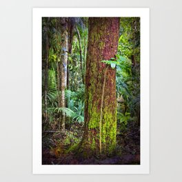 New and old rainforest growth Art Print