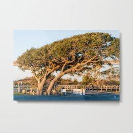 Leaning Tree in Soundside Park Metal Print