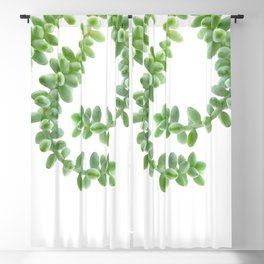 Hanging Succulents - Burro's Tail Succulents Blackout Curtain