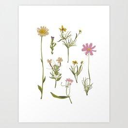 Pressed Flowers Art Print