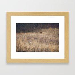 White-tailed deer Framed Art Print