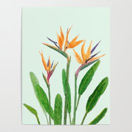bird of paradise flower painting Poster