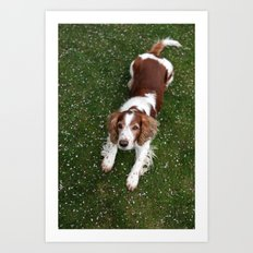 Welsh Springer Spaniel - Scott Art Print