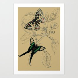 Scientific Colorful Butterflies Art Print