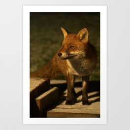 The Wild Red Fox Art Print