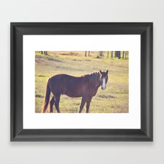 Chesnut Horse Framed Art Print