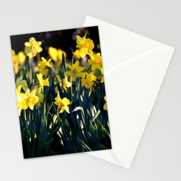 LOVELY DAFFODILS IN THE LATE SPRING AFTERNOON LIGHT Stationery Cards