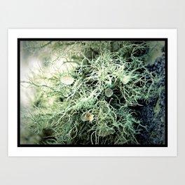 I Lichen Moss Art Print