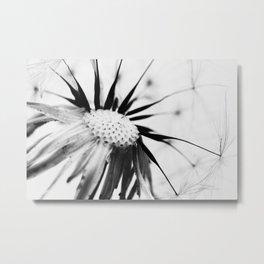 Dandelion BW Metal Print