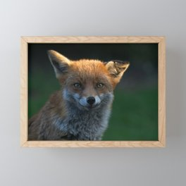 Wild Fox With A Floppy Ear Framed Mini Art Print