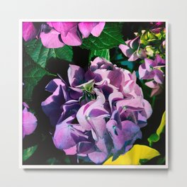 Hydrangeas at Botanical Garden Metal Print
