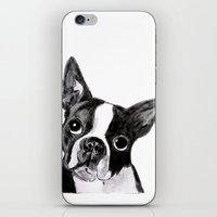 boston terrier iPhone & iPod Skins featuring Boston Terrier by Gooberella