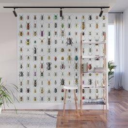 Beetlemania / Get your entomology on! Wall Mural
