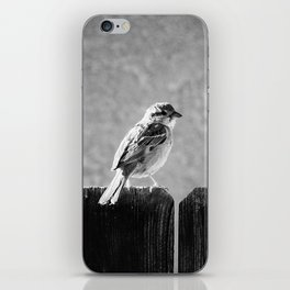 Sparrow BW iPhone Skin