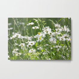 Beautiful Daisies Summer Meadow #decor #society6 #buyart Metal Print