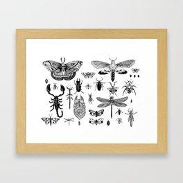 Bug Board Framed Art Print