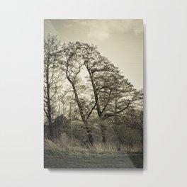 Oblique Autumn Tree Metal Print