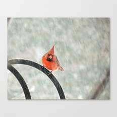 Male Cardinal in the Snow Canvas Print