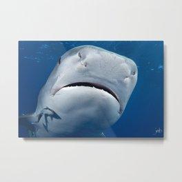 Tiger Shark Upclose Metal Print