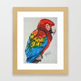 Scarlet Macaw Framed Art Print