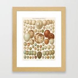 Antique Egg Lithograph Framed Art Print