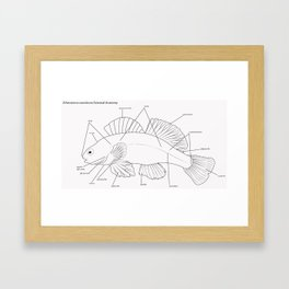 Anatomy of a Darter Framed Art Print