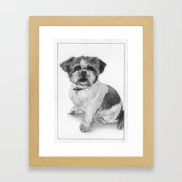 Barney the Shih Tzu Framed Art Print