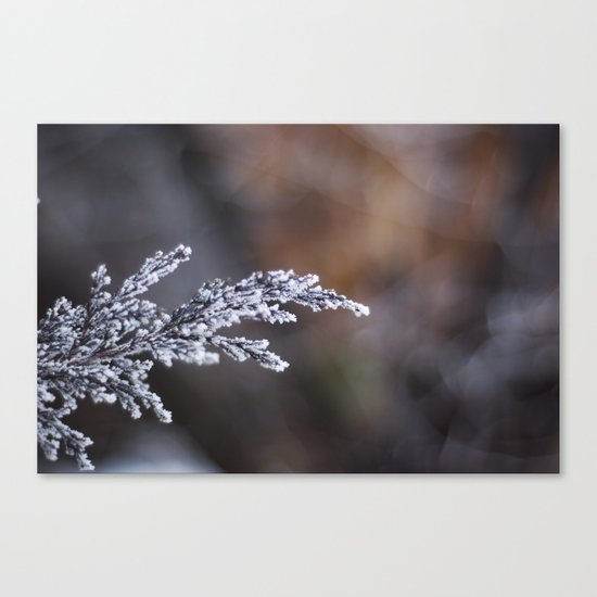Frosted Juniper Canvas Print
