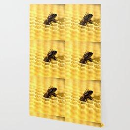 Licking bee Wallpaper