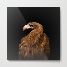 Aquila chrysaetos Golden eagle Metal Print