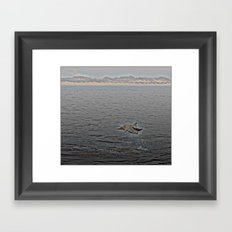 Dolphin Leap Framed Art Print