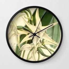 Angraecum sesquipedale Wall Clock