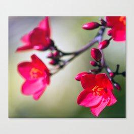 Valentine Red Canvas Print