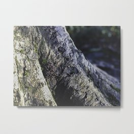 Tree Trunk Mushrooms - Nature Photography Metal Print