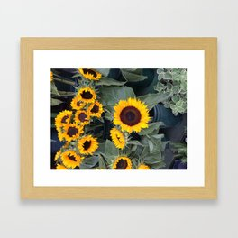 Sunflowers of Harlem Framed Art Print
