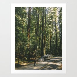 Avenue of the Giants Art Print