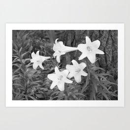Crisp Lilies  Art Print
