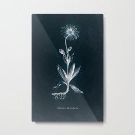 Cyanotype - Arnica Montana Metal Print