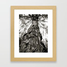 Oldest Tree in the Forest Framed Art Print