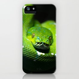 Green tree python (Morelia viridis), on a tree branch, dark background iPhone Case