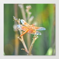 dragonfly Canvas Prints featuring Dragonfly by Lisa Argyropoulos