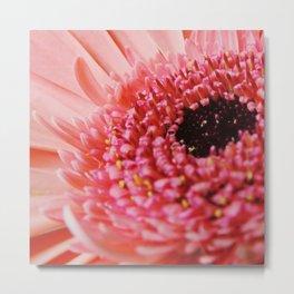 Pink Germini Closeup 6 Metal Print
